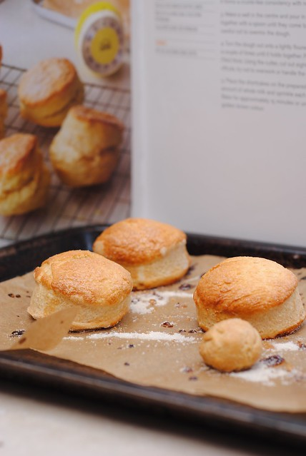 Basic shortcakes biscuits scones for strawberry shortcake american