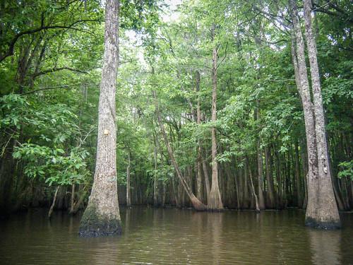 Sparkleberry Swamp-140
