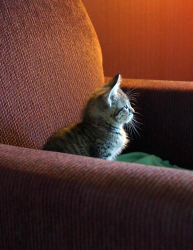 blogpaws-kittensC01619