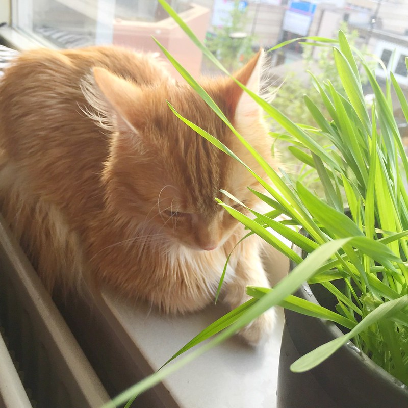 The reasons why I love everything about my cat grass