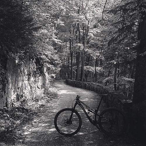bölchen zum 4. #belchen #mtb #mountainbiking #specialized #camber_expert_evo #vtt #fiirtig