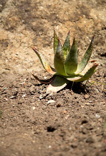 Garden - Unknown Cactus