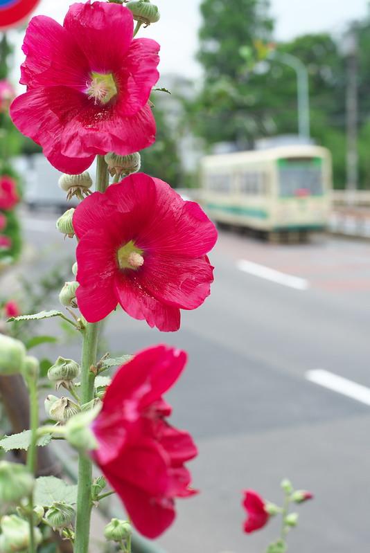 Tokyo Train Story 都電荒川線 2015年6月13日