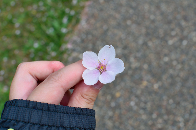 Picking up a blossom