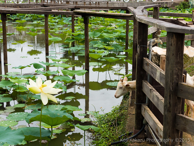 東南植物楽園-129