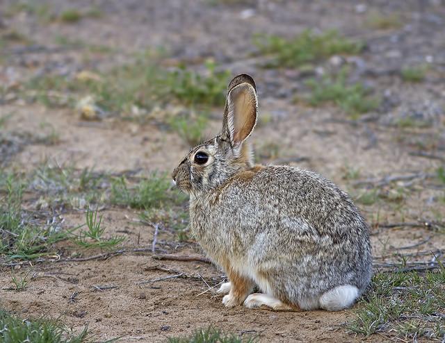 Rabbit Friend 7d_1903