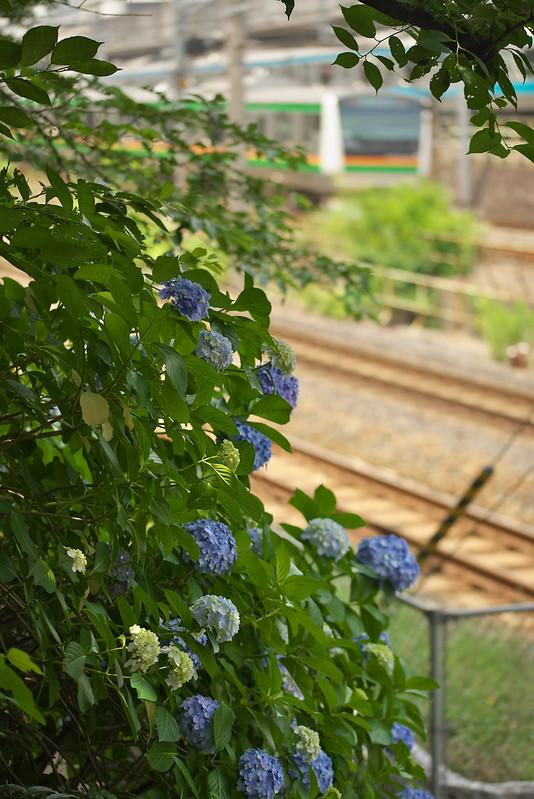Tokyo Train Story 東北本線 2015年6月13日