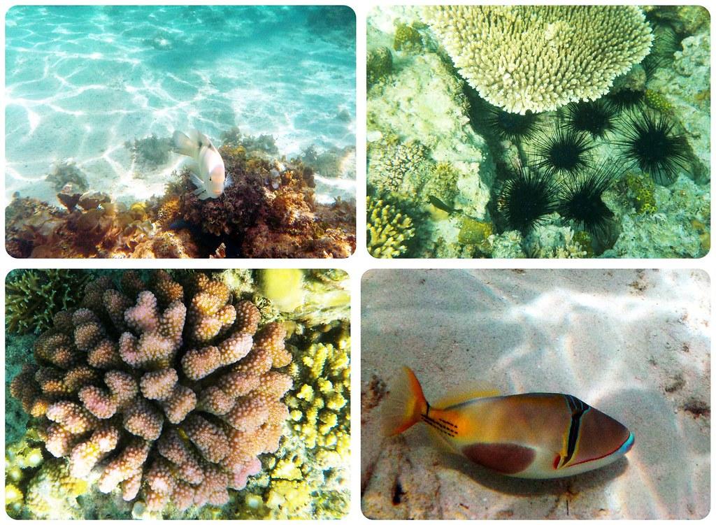 Bacuit Archipelago underwater Philippines
