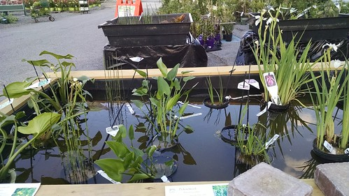 Aquatic Garden Plants