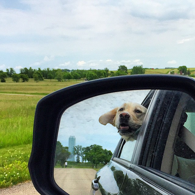 DOG PARK!!!!!