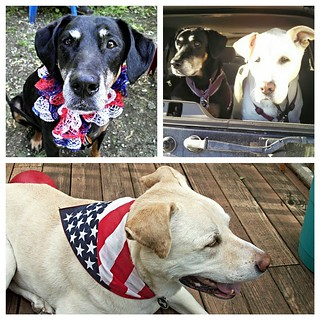 Happy Memorial Day! Missing these 2 like crazy... Lola & Zeus were both very special. ❤ #ilovemydogs #missthem #seniordog #cancerbites #caninecancerawareness #ilovemyseniordog #ilovebigmutts #dogsofinstagram #muttsofinstagram #instadog #dogstagram #