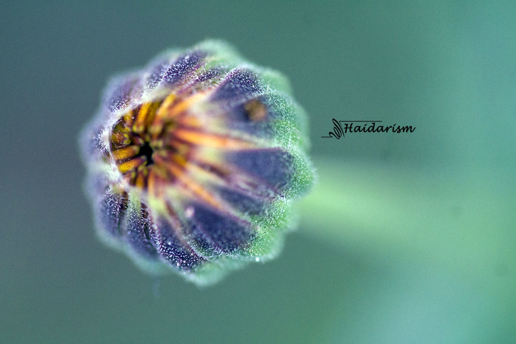 Magical Flower Bud