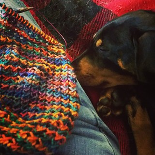 Super lazy Sunday... #knitting on my #painted #scarf while watching the NASCAR race with a #sleepingpuppy next to me and 2 more across from me. #lifeisgood #puppygram #knitstagram #instaknit #instapuppy #dobiemix #getyourkniton #rescuedpuppiesofinstagram