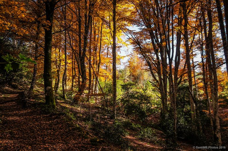 El bosque aclara