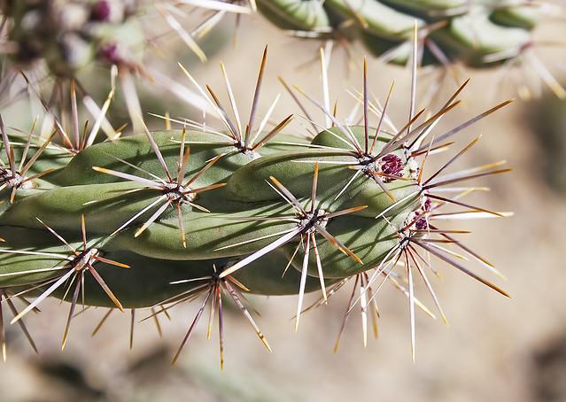 Cactus 20d _1618
