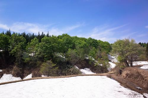 残雪と新緑