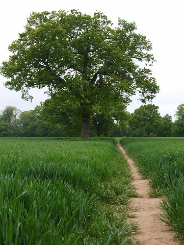 Path to Berkswell