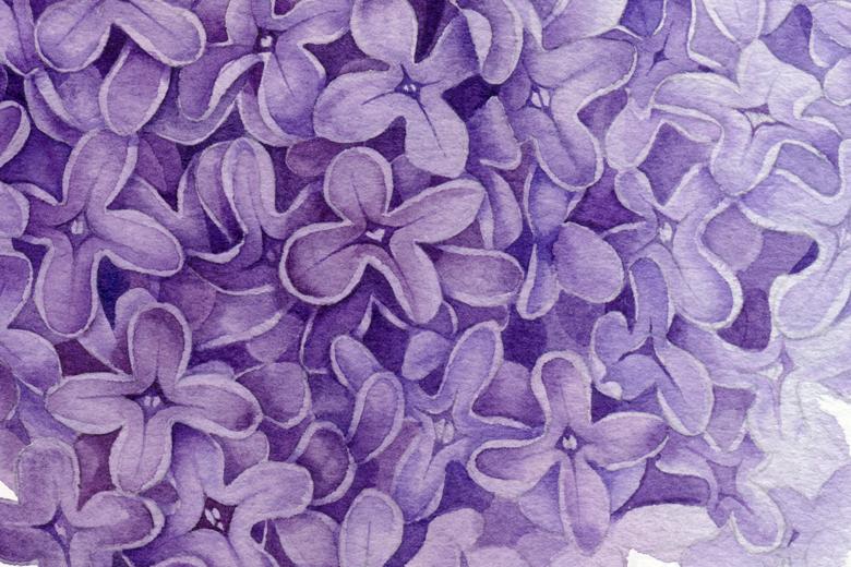 Lilac_780_1