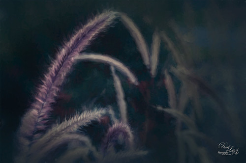 Image of Fountain Grass