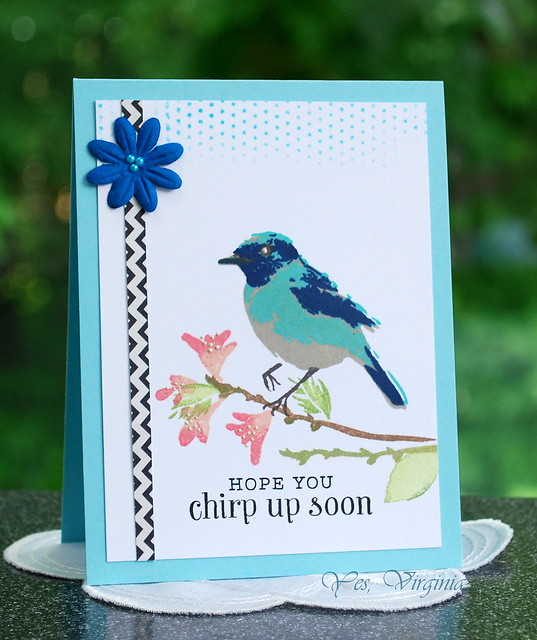 chirp up soon