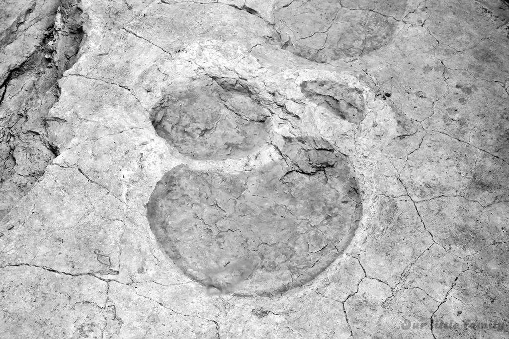 dinotec porrentruy 2