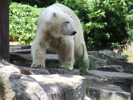 zoo berlin 4