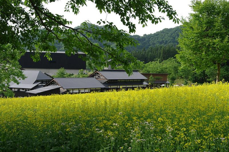 八海醸造 菜の花畑 #2_201505_NO1