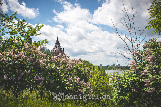 Library in the lilacs - wide
