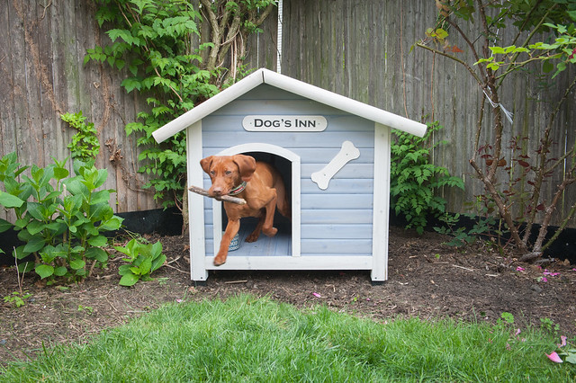 "Coastal Style Dog House in blue with white trim that has a ""Dogs Inn"" sign over the door and a small white bone to the right of the door. Gunner the dog is coming out of the house with a stick"