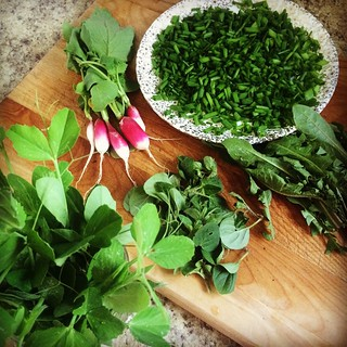 Early harvest: thinning peas and radishes, taming chives, oregano, and dandelions. #gardening | by kindreds unite