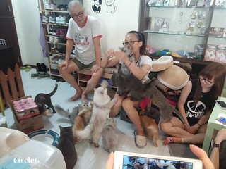 CIRCLEG CAT CAFE 貓貓地 香港 旺角 COOKING HEYHEY (17)