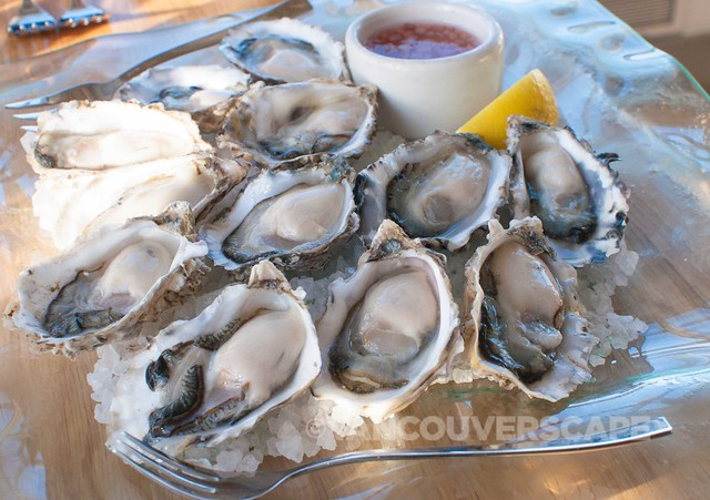 Drayton Harbor oysters on the half shell