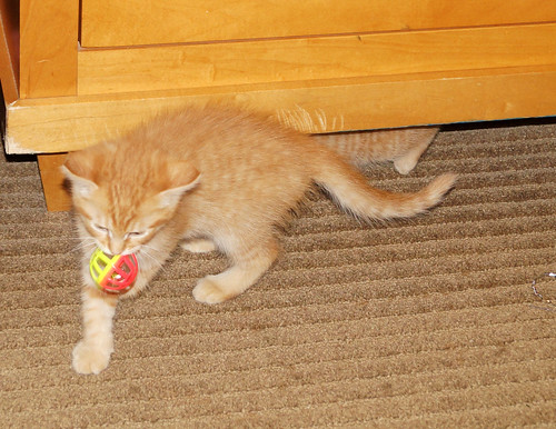 blogpaws-kittensC01623
