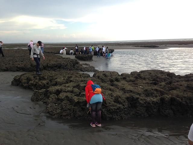 桃園新屋藻礁地質地形。攝影:廖靜蕙