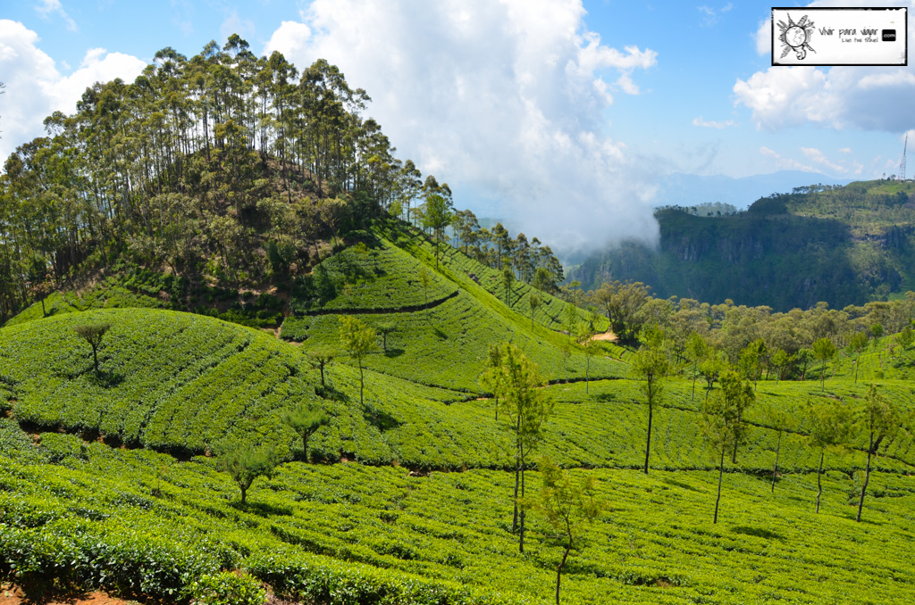 tea-plantation-sri-lanka-4760