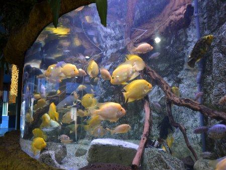 Aquarium Barcelona 5