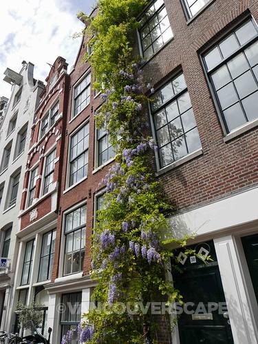 Amsterdam 2015-18