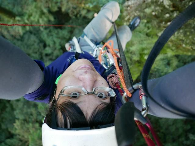 爬樹上下移動,若非獨攀,則需要團隊合作良好的默契,陳雅得感嘆,每一個動作都充滿智慧。圖片來源:陳雅得。