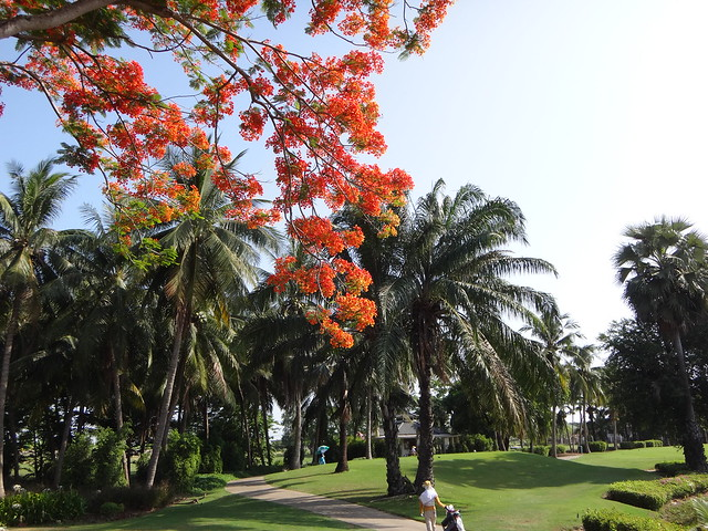 Flame Tree at Royal Gems