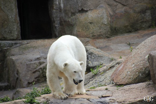 Besuch Zoo Berlin 31.05.201574