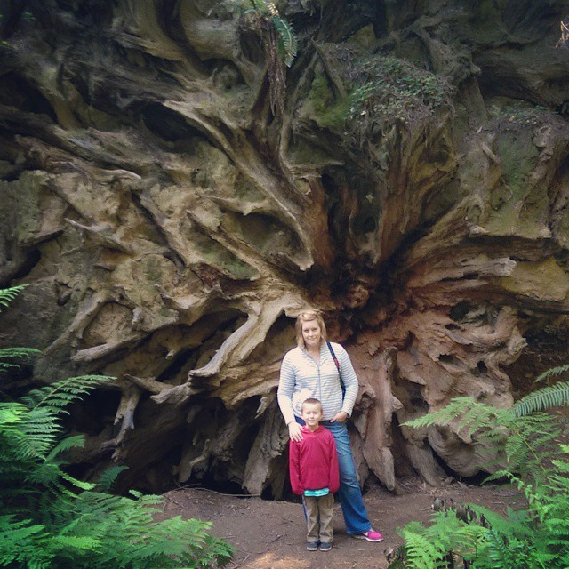 I'be almost run out of forest and trees, heading back into civilization.  But one last stop in founders grove, along the Avenue of the Giants has found me some of the largest crashed trees ever.  This is the left over root structure of a 300 foot redwood