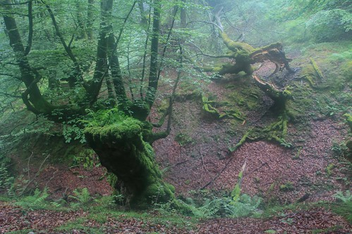 Parque Natural de #Gorbeia #DePaseoConLarri #Flickr - -873