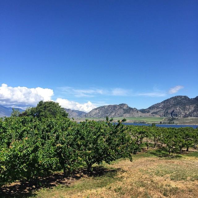 Okanagan view