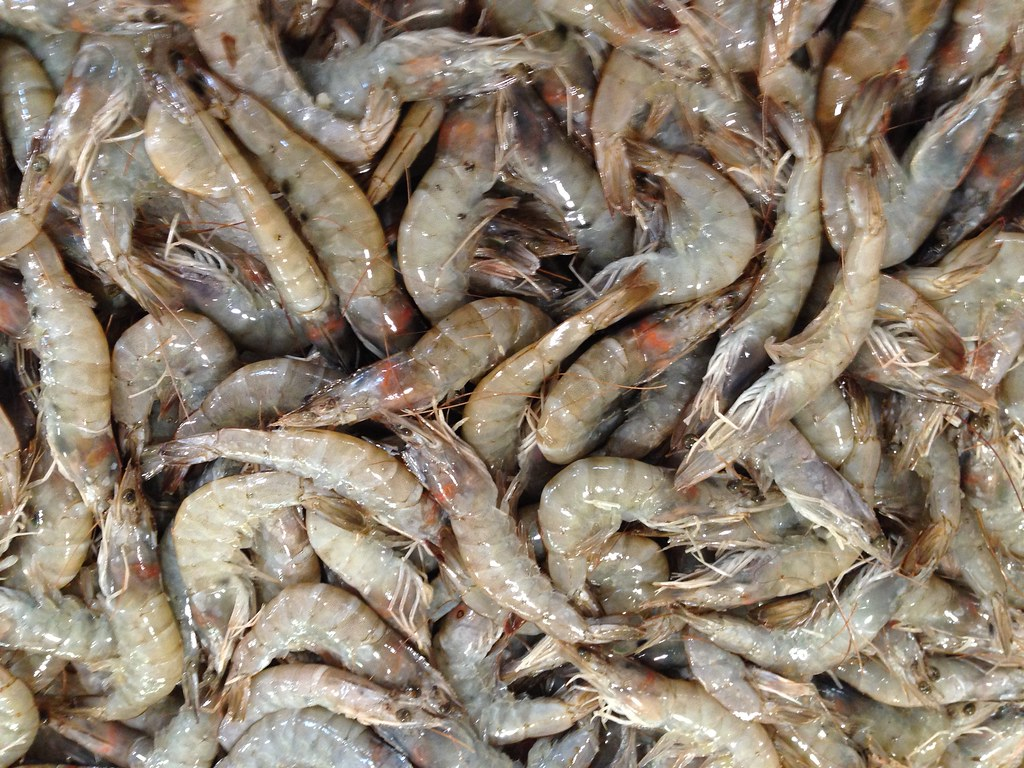 Raw Shrimp Head On Jumbo Shrimp At A Baton Rouge Supermark Flickr