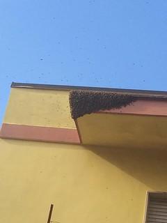 Il grande nido sul cornicione a Casamassima