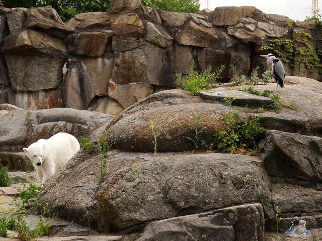 Zoo Berlin 09.06.2015  45