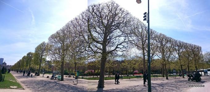 trees near Eiffel Tower
