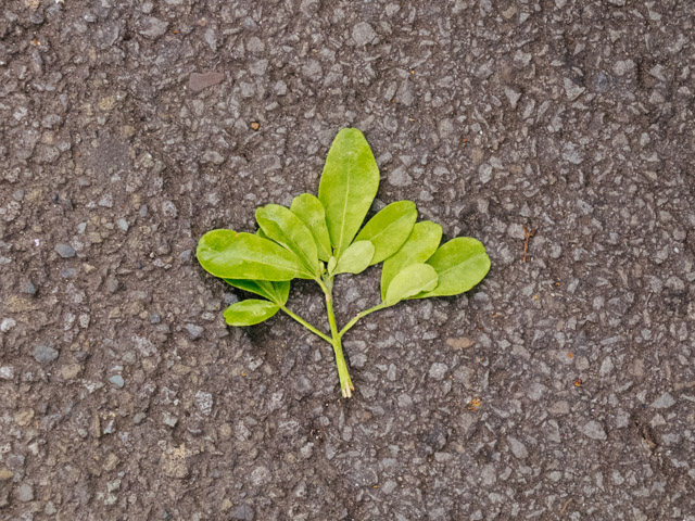 squashed leaf on ground