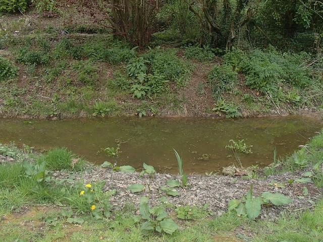 tidal-pond