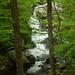 Lower Lynn Prong Falls - GSMNP